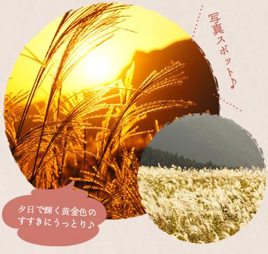 夕日で輝く黄金色のすすきにうっとり♪写真スポット