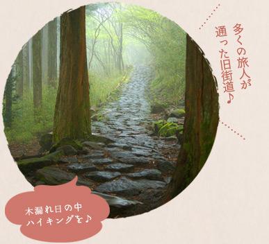 多くの旅人が通った旧街道♪木漏れ日の中ハイキングを♪
